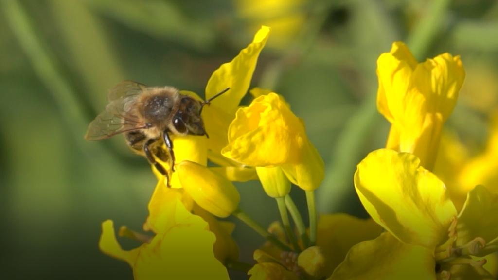 Ankieta dla pszczelarzy w ramach projektu DEMETER